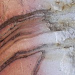 welded phallis