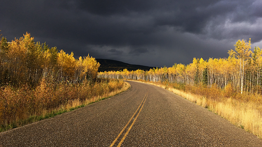 autumn colours in the Yukon
